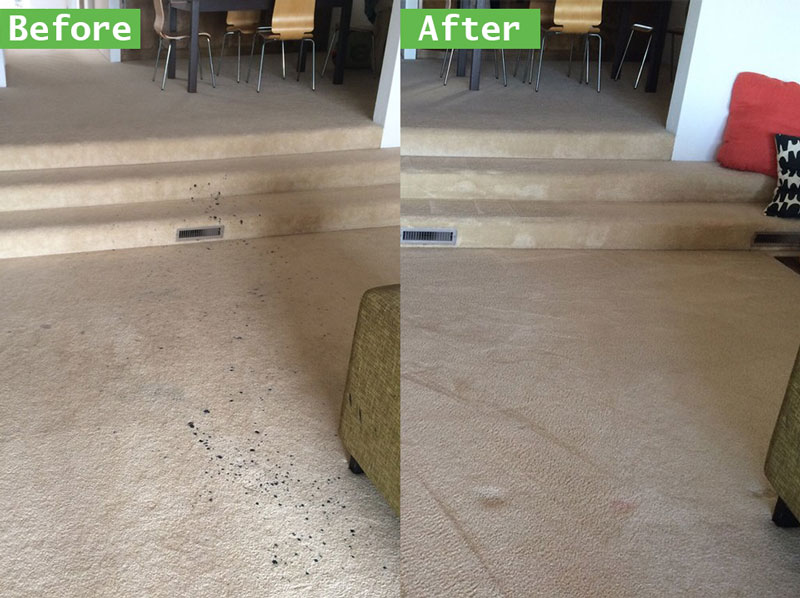Greatest Carpet Cleaning Deals and Prices Ontario Area Rug Cleaning