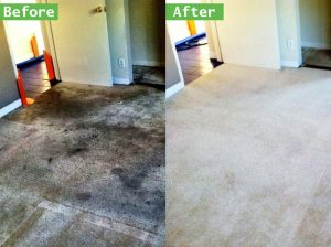 ▷🥇Spot and Stain Removal Ontario
